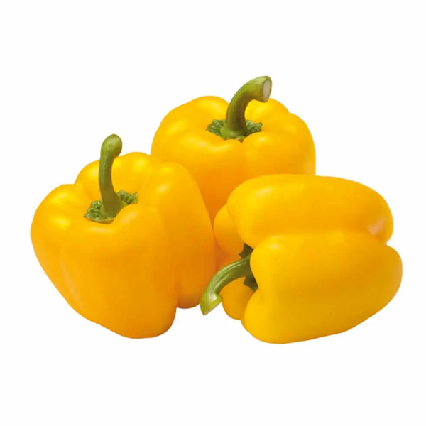 CAPSICUM YELLOW HOLLAND